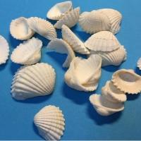 Ракушки мелкие Белые створки 23-25 мм