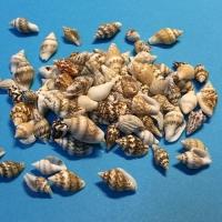 Ракушки мелкие пестрые 10-14 мм