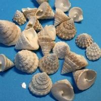 Ракушки мелкие Трохус 12-18 мм