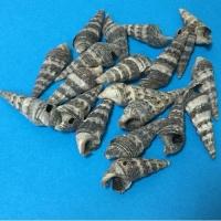 Ракушки мелкие серые в полоску 25 мм